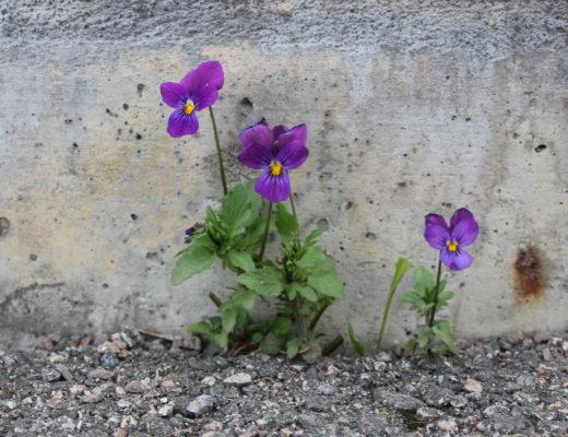 Blomst med viljestyrke