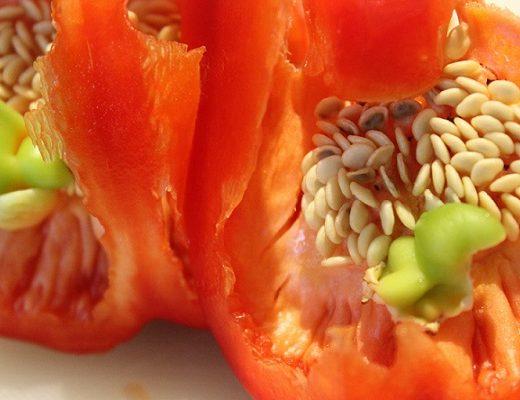 Skjære paprika